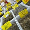 Variety of tea leaves on offer in Chinatown
