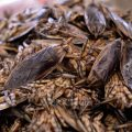 Insects for sale at Khlong Toey market in Bangkok