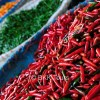 Chilies of different colors at Bangkok's biggest flower market